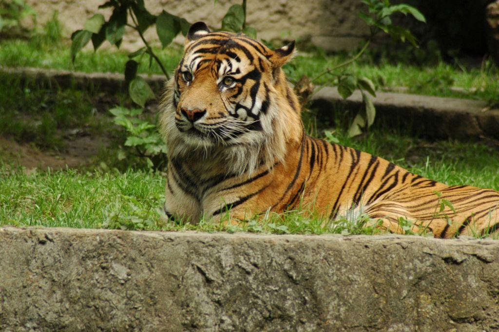 Zoo, fot. Anna Witkowska