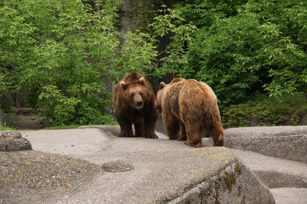 Niedźwiedzie, fot. Anna Witkowska