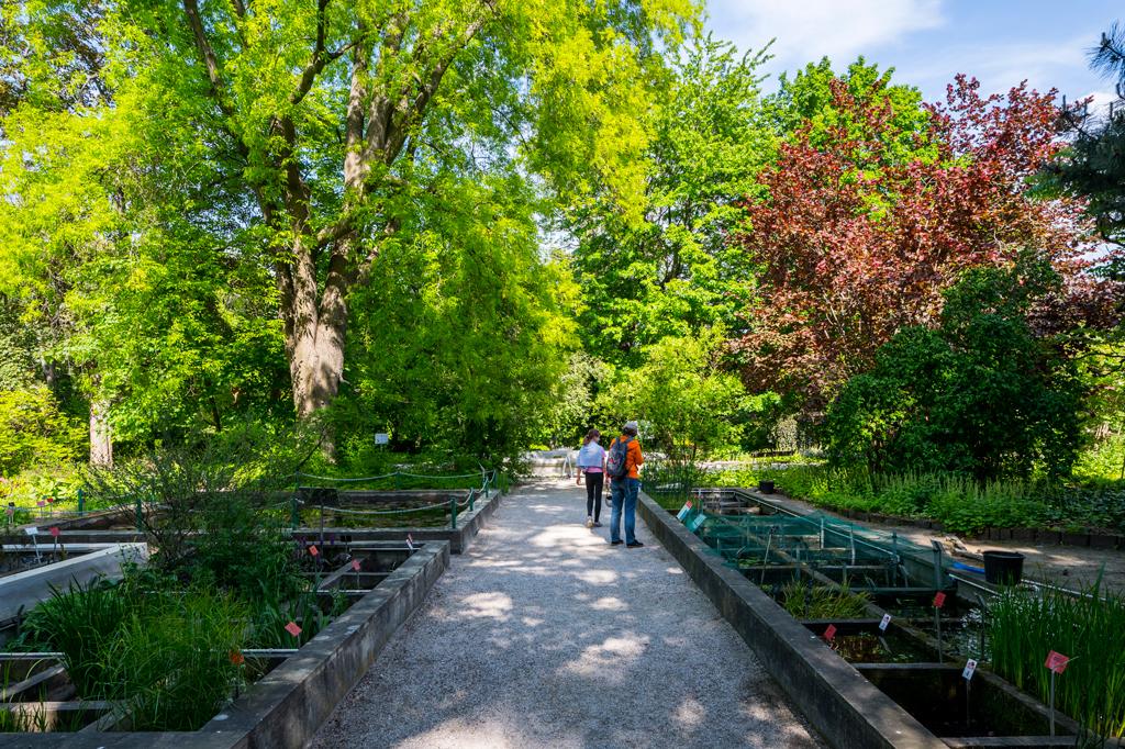 Ogród Botaniczny UW, fot. Filip Kwiatkowski