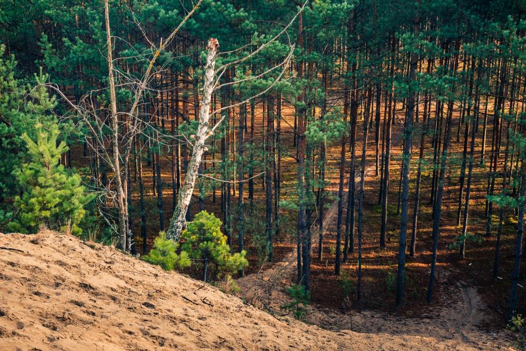 Chojnowski Park Krajobrazowy, fot. Artur Bociarski, Adobe Stock